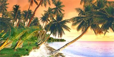 Beach Theme Luau Party South Pacific Theme Caribbean